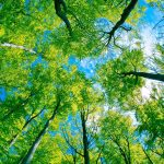 Forest-trees-green-paradise_2560x1600
